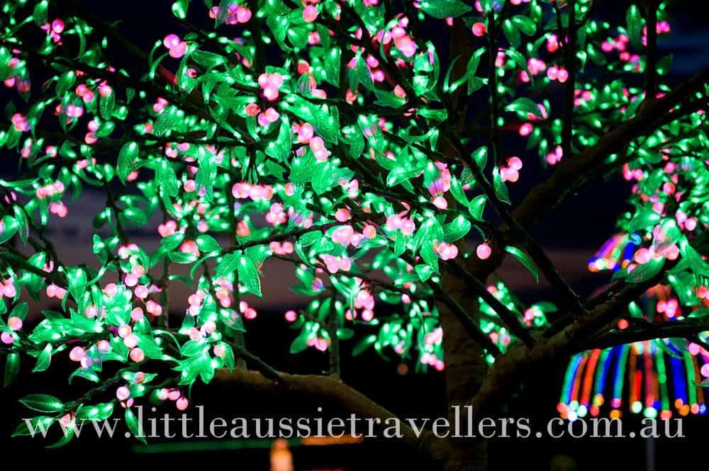 Twinkle Twinkle Christmas Lights – Wordless Wednesday