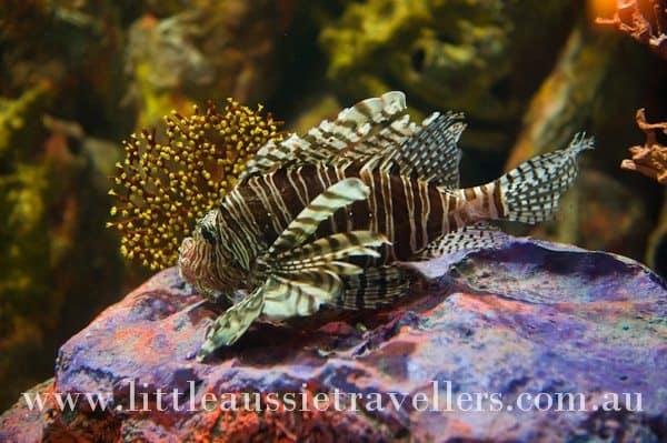 melbourne aquarium fish