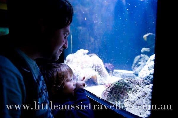 family melbourne aquarium