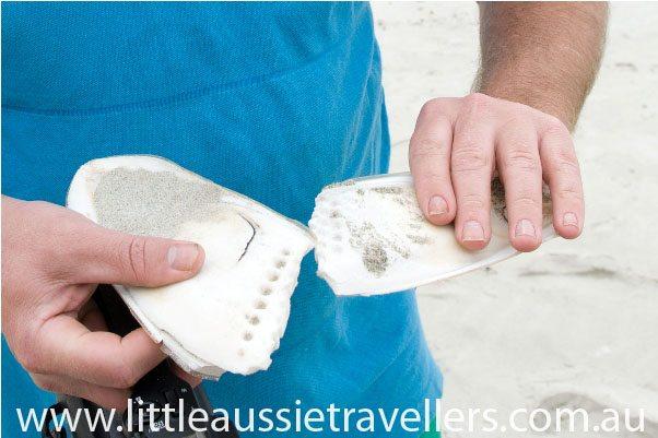 cuttlefish shell