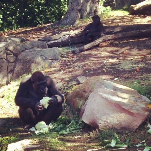 Animals at Taronga Zoo family activities