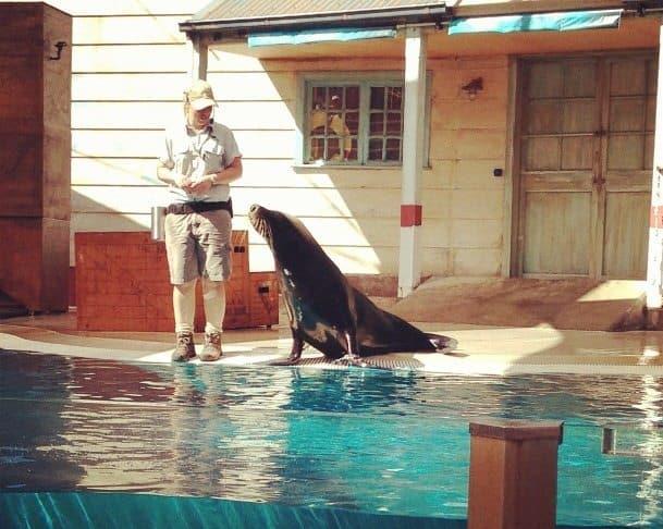 Seal show at Taronga Zoo Sydney