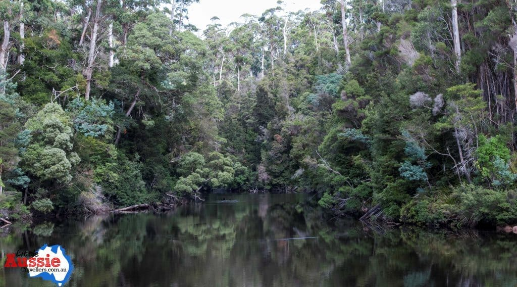 visiting the tarkine in Tasmania