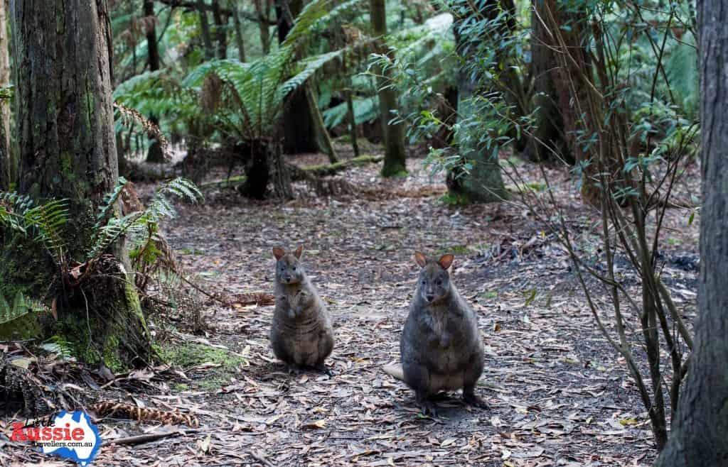 Tasmanian Wildlife Cruises