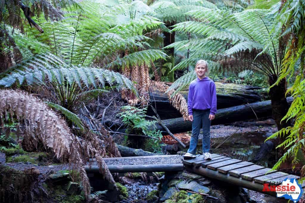 bushwalking with kids