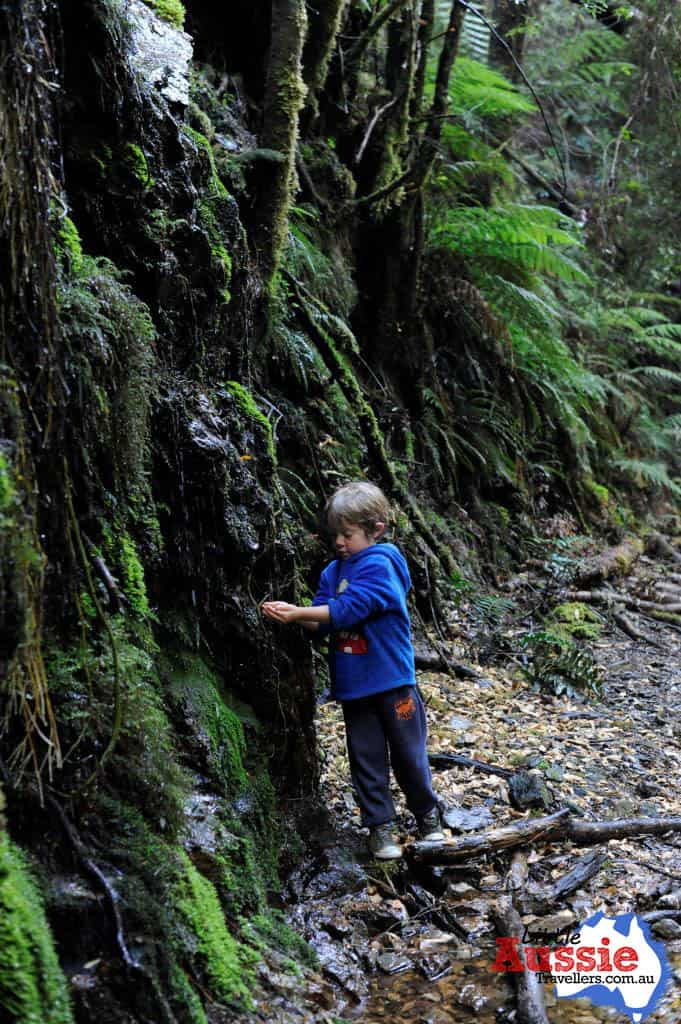 Bushwalking Tasmania with kids