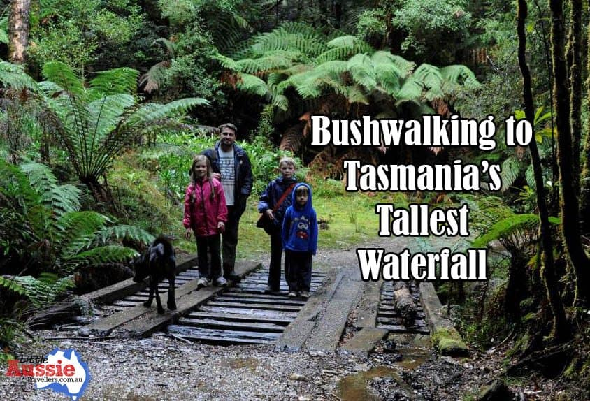 Montezuma Falls Bushwalk: Tasmania with Kids.