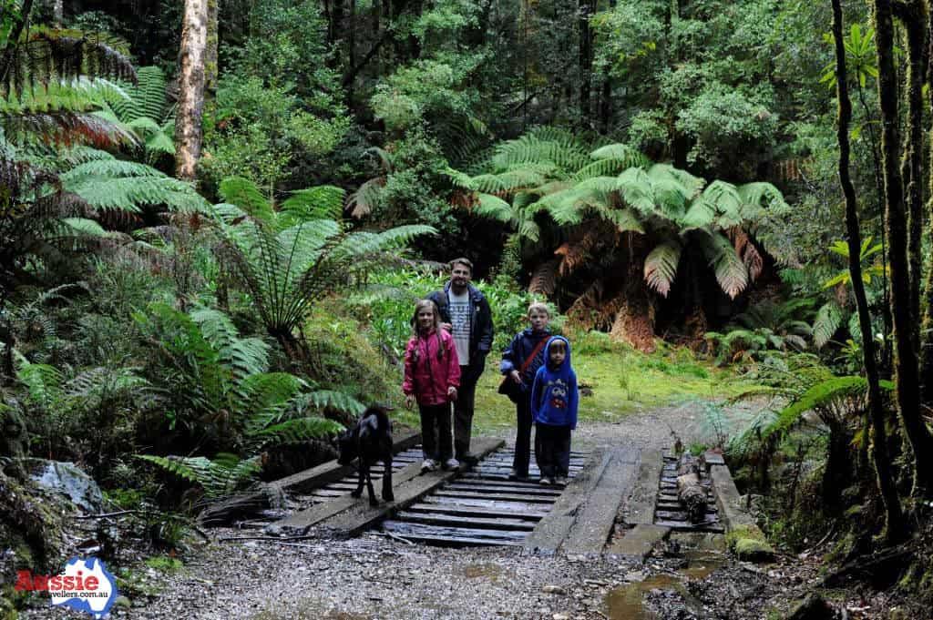 Tasmania Waterfall Walks