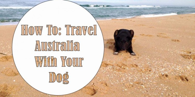 travel australia with a dog